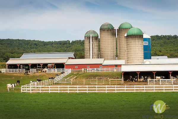 Route 64, Clinton County. Dairy farm,