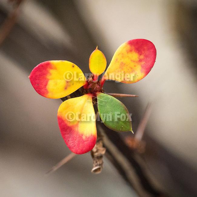 Golden leaves during autumn, Peek Hill, Jackson