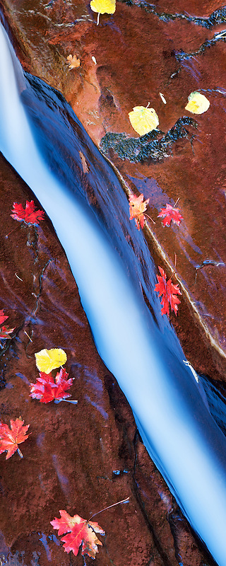 Narrow slot in Left Fork of North Creek with fall colored Bigtooth Maple leaves. Zion National Park, Utah.