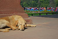Dog and College Students New Delhi India the Red Fort