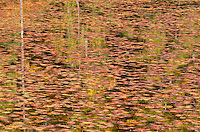 Water shields fill the surface of a small bay on Big Island Lake in Hiawatha National Forest in Schoolcroft County, Michigan