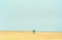 A dry field with a single tree, blue sky, sun haze, a scorching hot summer, Bourgogne