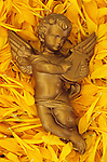 Winged and lightly robed cherub playing lyre painted gold and lying in bed of yellow Chrysanthemum petals