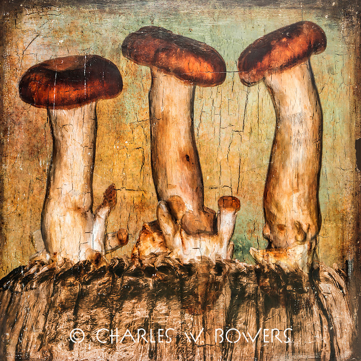 Hand Pulled Pigment Ink Image Transfer<br /> One of a kind original art on wood cradle board. Board size shown in the image title.