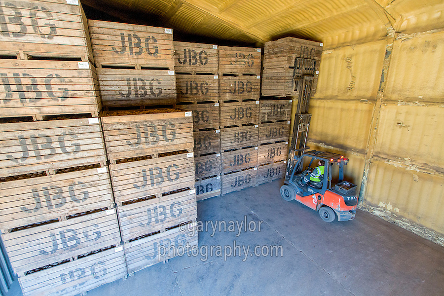 Loading potato store with Maris Piper - Lincolnshire, October
