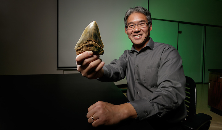 Kenshu Shimada, professor of paleobiology in the College of Science and Health, holds a fossilized tooth of megalolamna paradoxodon, a new species of extinct shark that he and his international research team describe in their study published in the international scientific journal Historical Biology. Shimada and his team based their discovery on the shark's large fossilized teeth, some up to 4.5 centimeters (1.8 inches) long, found in the eastern and western United States (California and North Carolina), Peru and Japan. The shark lived during the early Miocene epoch about 20 million years ago and belongs to a shark group called Lamniformes, which include the modern-day great white and mako sharks. (DePaul University/Jeff Carrion)