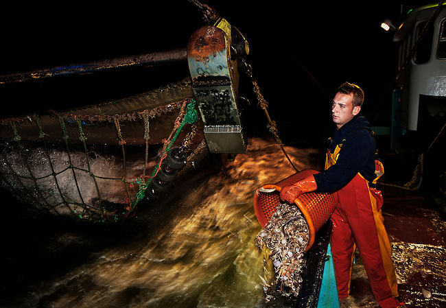Michael releasing the unwanted by-catch on the beam trawler 'Dini', (0.62) while fishing for grey shrimp off the coast of Oostende, Belgium. <br /> <br /> Saleable by-catch such as plaice and sole is retained, while the rest is thrown back into the sea. <br /> <br /> The boat leaves each day at 4.30pm and returns the next morning around 7.30am, six days a week.