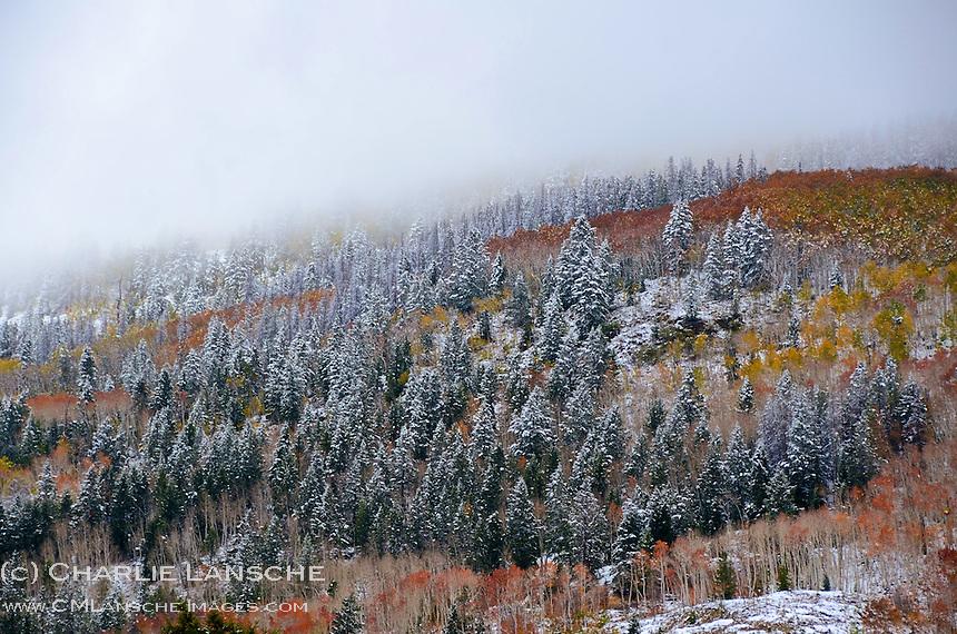 Uinta Mountains, Utah.