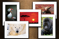 Nature Inspired Art Cards - Boxed Sets $21.95 / Individual $3.50