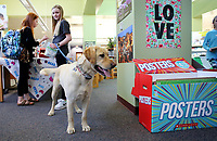 NWA Democrat-Gazette/DAVID GOTTSCHALK  Anna Clair Cotton (right), a fifth grade student at McNair Middle School, holds onto  Buster, a yellow labrador, as she looks through a selection of books with Brooklyn Bradley, also a fifth grade student, Thursday, March 15, 2018, during the Paws for Books Book Fair in the library at the school in Fayetteville. The school is hosted the 3rd annual Dog Party during their book fair to raise funds, adoption fee donations and pet items for the Fayetteville Animal Shelter. The first 50 students with dogs received natural dog treats from Nudges.