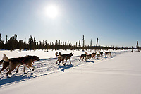 Michelle Phillips runs down the trail two miles after leaving the the Kaltag checkpoint during the 2010 Iditarod
