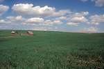 Farming, dry Land wheat, Spring, farm, Eastern Washington State, USA,