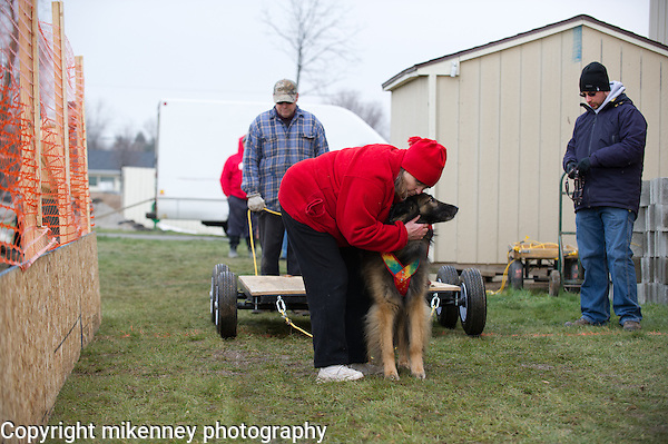 IWPA Weight Pull December 2012 at Boomtowne Canine Campus Farmington, NY