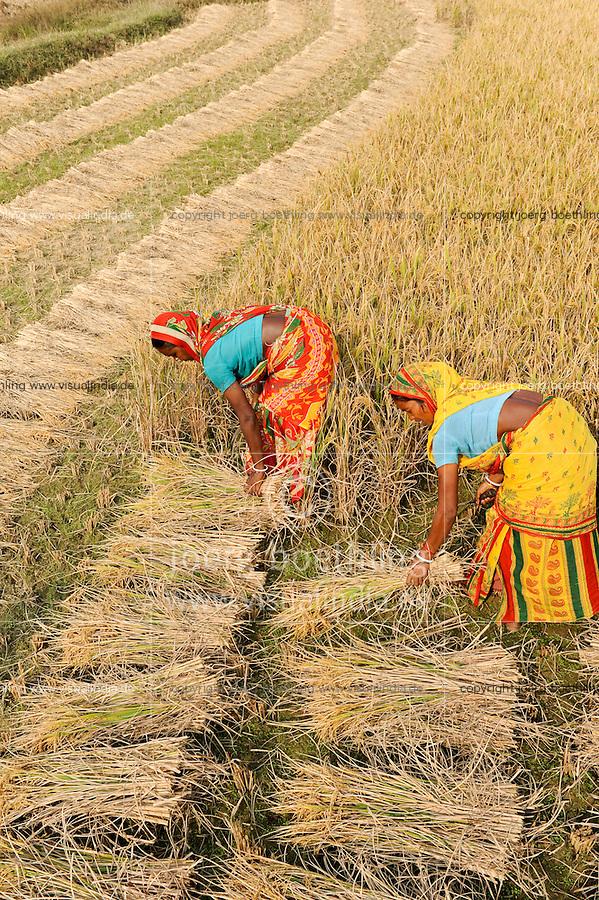 INDIA West Bengal, Dalit woman harvest rice for community rice bank in village Kustora / INDIEN Westbengalen , Dorf Kustora , Reisernte , Dalit Frauen betreiben gemeinsam eine Reisbank zur Ueberbrueckung von Ernteausfaellen und bei Nahrungsverknappung , gefoerdert durch LWS Indien
