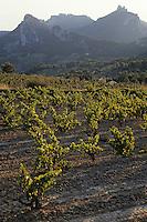Europe/France/Provence-Alpes-Côte d'Azur/84/Vaucluse/Gigondas: [Les dentelles de Montmirail et] le vignoble de Gigondas (AOC Côtes-du-Rhône-Village)