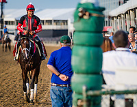 BALTIMORE, MD - MAY 18: Classic Empire walks back to trainer Mark Casse after training on the track in preparation for the Preakness Stakes at Pimlico Race Course on May 18, 2017 in Baltimore, Maryland.(Photo by Douglas DeFelice/Eclipse Sportswire/Getty Images)