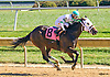 Church Monkey winning at Delaware Park on 10/15/16