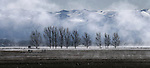 Morning fog in Minden, Nev., on Monday, March 4, 2013..Photo by Cathleen Allison