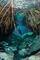 RX0522-D. scuba diver (model released) exploring the Casa Cenote freshwater sinkhole swims through a tunnel created by roots of mangrove trees above and chunks of limestone below. Riviera Maya, Yucatan Peninsula, Mexico.<br /> Photo Copyright &copy; Brandon Cole. All rights reserved worldwide.  www.brandoncole.com