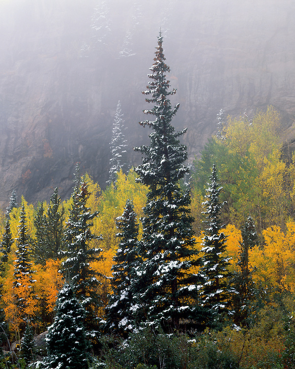 Foggy fall color scene in Glacier Gorge; Rocky Mountain National Park, CO