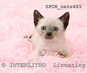 Xavier, ANIMALS, cats, photos, SPCHCATS693,#A# Katzen, gatos
