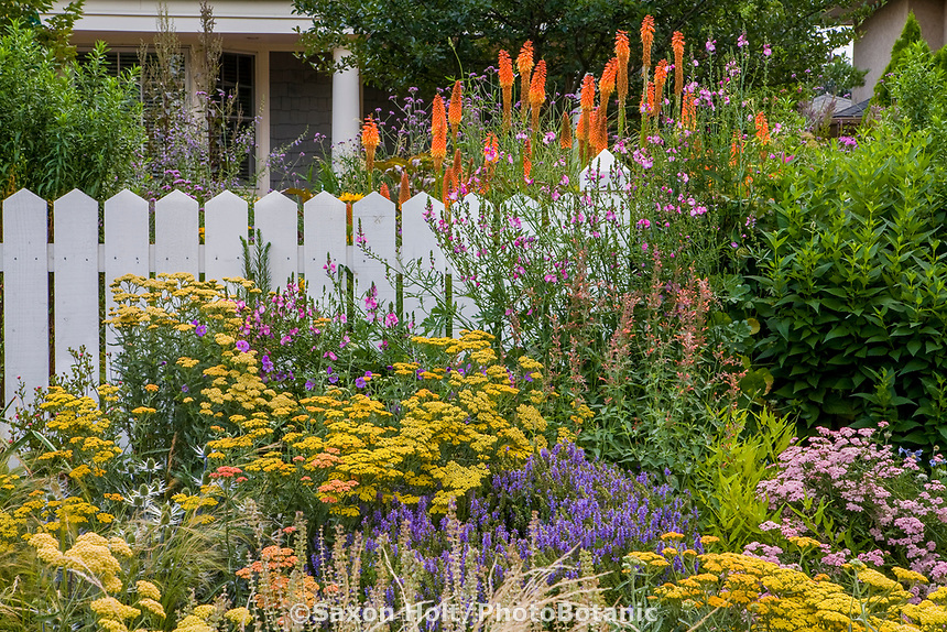 Denver Colorado front yard cottage perennial garden with yellow Yarrow (Achillea), Salvia 'Blue Hill', Red Hot Poker (Kniphofia 'Alcazar'), Sidalcea 'Party Girl' and Agastache; design by Tom Peace (Weckbaugh)