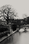 a tree & a bridge next to the River Cam in Cambridge, England on a cold, wet english winter day.