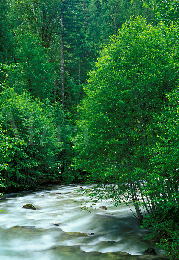 Sulpher Creek, Suiattle River Road, Darrington, Washington