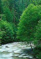 Sulpher Creek, Suiattle River Road, Darrington, Washington