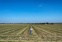 Colin Thompson, with Thompson Farms, on a newly planted alfalfa crop near Holly, Colorado, Friday, May 20, 2016. Thompson Farms, a large farming operation, hold junior water rights to irrigate with water diverted from the Arkansas River through the Amity Canal.<br /> <br /> Photo by Matt Nager
