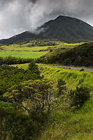 France, île de la Réunion, Parc national de La Réunion, classé Patrimoine Mondial de l'UNESCO,  prairies d'altitude de la Plaine des Cafres, // France, Reunion island (French overseas department), Parc National de La Reunion (Reunion National Park), listed as World Heritage by UNESCO , Mountain pasture of the Plaine des Cafres,