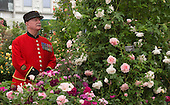 Sunday, 19 May 2013, London, UK. RHS Chelsea Flower Show, Chelsea Pensioners having a quick preview of the works in the Grand Pavilion.