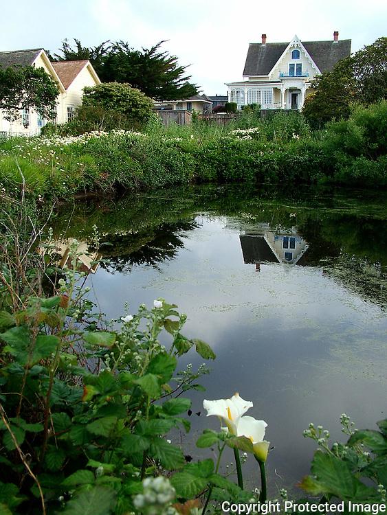 Pond in Mendocino