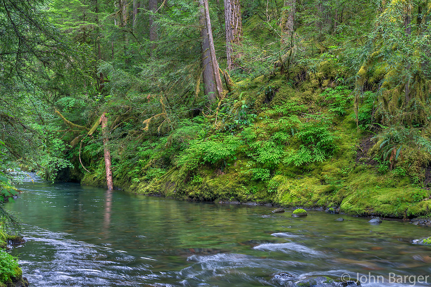 ORCAN_D141 - USA, Oregon, Willamette National Forest, South Fork Breitenbush River and lush old growth forest in spring.