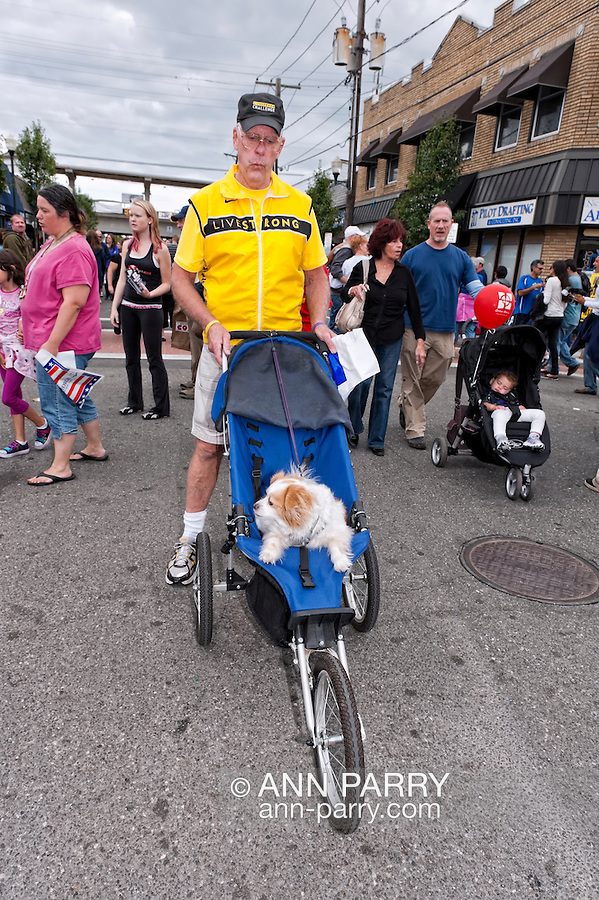 Man pushing his cute ollder dog in three-wheeled stroller at 25th Annual Bellmore Street Fair, at Bellmore, Long Island, New York, USA,  on September 18, 2011.