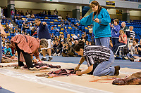Seal skinning competition at 2008 World Eskimo Indian Olympics, Fairbanks, Alaska.