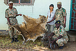 African Lion (Panthera leo) biologist, KIm Young-Overton, with anti-poaching commanders who confiscated lion skin and snares used by poacher, Kafue National Park, Zambia
