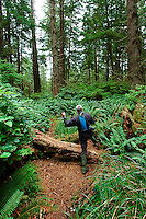 Male hiker with hiking poles and camelback on lush green forest trail, Olympic National Park, Coastal Strip, Olympic National Park, WA.