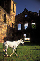 White Horse. Architecture, ruins from the imperial period. Colonial houses. City: Alcântara; State: Maranhão; Brazil. Cross.