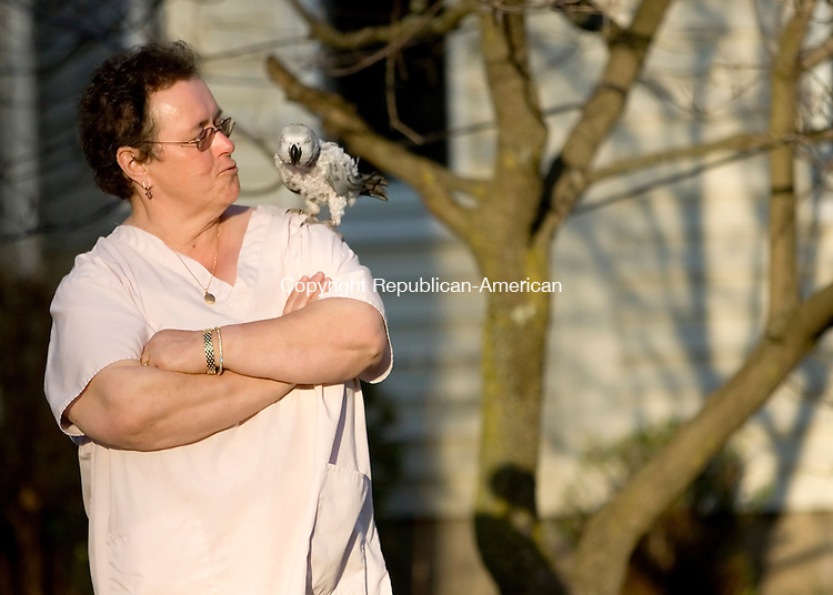 TORRINGTON, CT- 21 APRIL 2008- 042108JT01-<br /> Peggy Bruzik talks to her 10-year-old African Gray parrot, Misty, outside her Torrington home on Wilson Avenue on Monday. Bruzik says Misty loves to go for walks outside when she's not practicing her 900-word vocabulary at home.<br /> Josalee Thrift / Republican-American