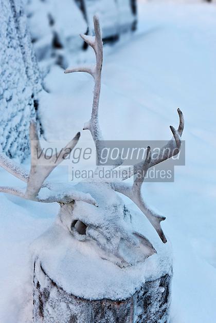 Europe/Finlande/Laponie/ Env de Levi: Levin Lapinkylä est une ferme traditionnelle le long de la Ounasjoki -C'est:La ferme des rennes - Tête et bois de renne