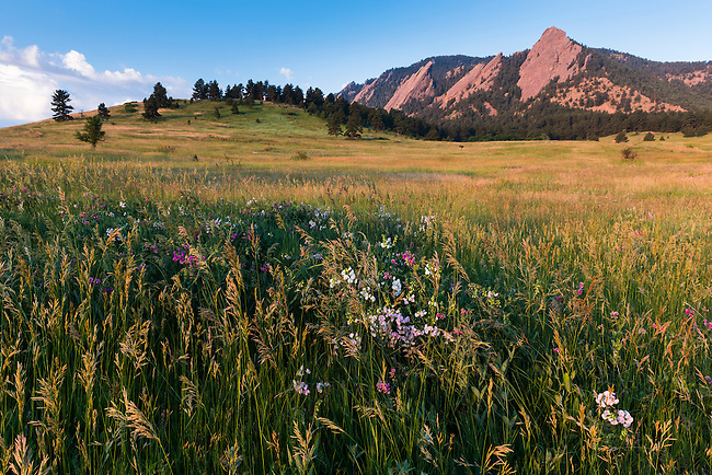 view of the Flatirons, summer morning in Chautauqua Park, Boulder, Colorado, USA