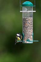Kohlmeise, an der Vogelfütterung, Fütterung am mit Körnern gefüllten Futtersilo, Körnerfutter, Kohl-Meise, Meise, Meisen, Parus major, great tit. Ganzjahresfütterung, Vögel füttern im ganzen Jahr