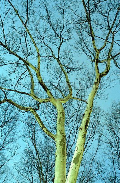 Available directly from Jeff as a fine art print and for commercial/editorial licensing.  Original image photographed on 35mm transparency film.  <br />