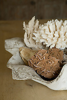 A display of corals in a stone dish.