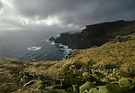 Auckland Islands. Adams Island . New Zealand Sub Antarctic Islands.