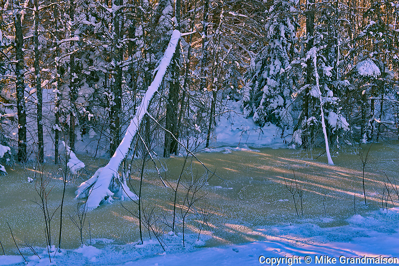 Trees at edge of creek at sunset<br />