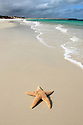 Starfish on remote beach