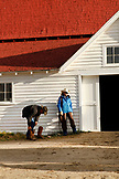 USA, Wyoming, Encampment, a cowboy puts on his boots in front of a barn before heading out to a branding, Big Creek Ranch
