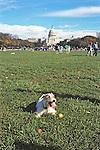 Dog On Washington D  C Mall